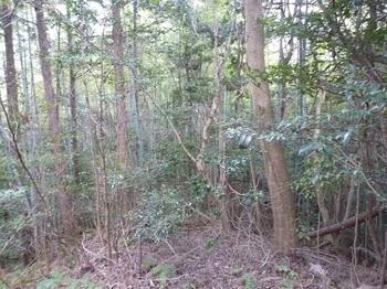 P1040568竹混じり・左側植林帯.JPG