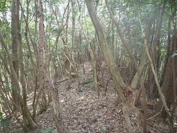 P1040575雑木尾根の登り.JPG