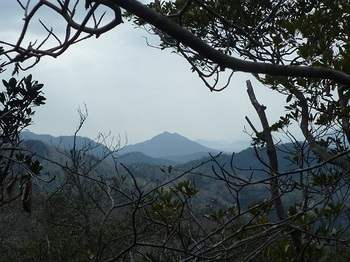 P1040579小岩上樹間に矢筈ヶ岳.JPG