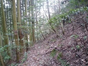 P1040600植林沿いの山道.JPG