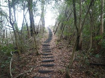 P1040676龍野山山頂手前の登り.JPG