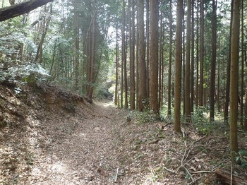 P1040821植林沿いの幅広道(林道).JPG