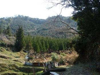 P1050070林道終点付近から黒石山.JPG