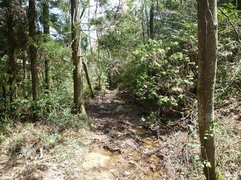 P1050151沢水が流れる山道.JPG