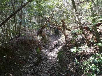 P1050164掘割状の道.JPG