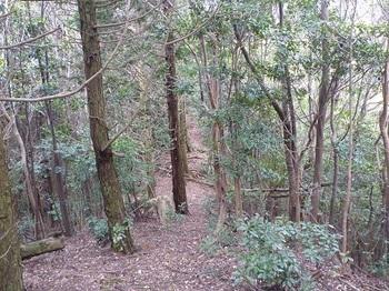 P1050211山頂下の尾根・左ヒノキ林.JPG