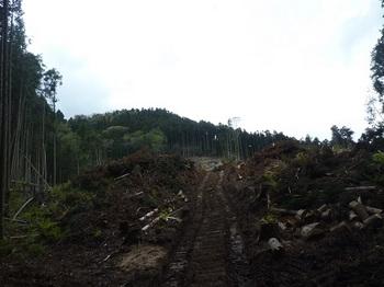 P1050237伐採作業道(左).JPG