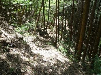 P1050301山道.JPG