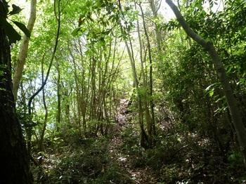 P1050432柏木山への山道.JPG