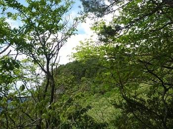 P1050434前方樹間に柏木山.JPG