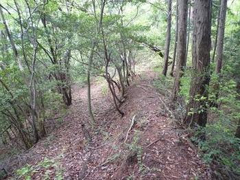 P1050461土塁状の山道(左は分岐道).JPG
