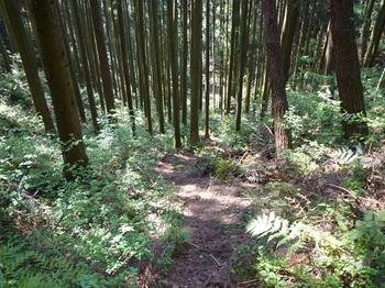 P1050519下山道・下に林道終点が見える.JPG