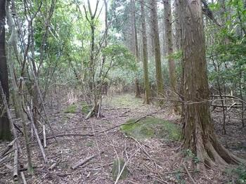 P1050663植林境.JPG