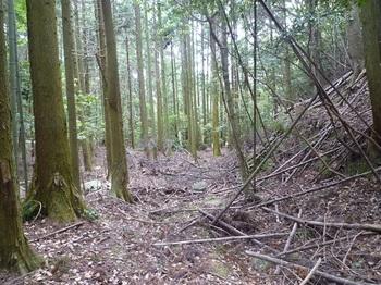 P1050681植林帯の山道.JPG
