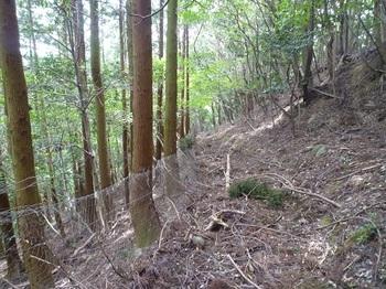 P1050688枯れ枝の積もる山道.JPG
