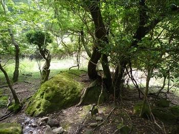 P1050733棚田上・庭園風.JPG