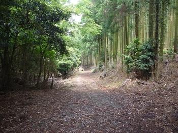 P1050763豊北町側の林道.JPG