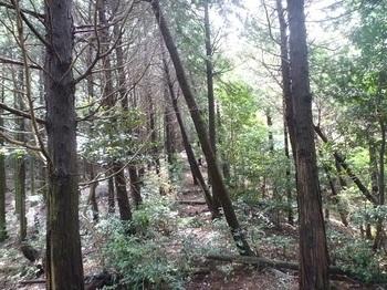 P1050866植林境.JPG