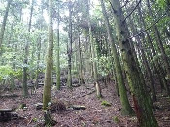 P1050867植林帯.JPG