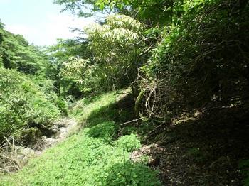 P1050904下草が被るそま道.JPG