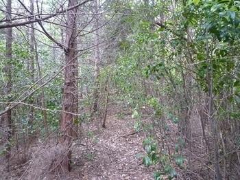 P1060003荒れ加減の植林尾根.JPG