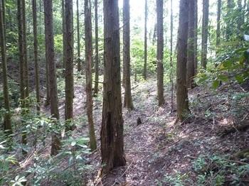 P1060020植林境.JPG
