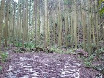 P1060150舗装林道終点.JPG