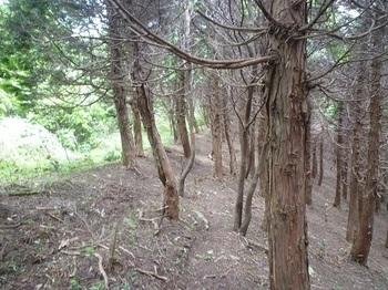 P1060176ヒノキ林境の尾根道.JPG