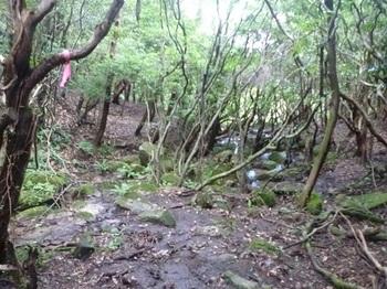 P1060182本谷コースの下山道.JPG