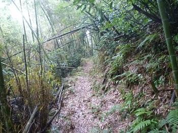 P1060232竹林沿いの登山道.JPG