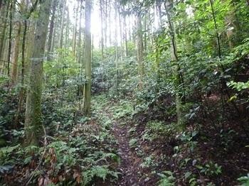 P1060242植林帯沿いの登山道.JPG