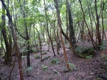 P1060244疎林尾根と散在する岩.JPG