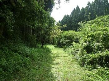 P1060264大岩郷への林道.JPG