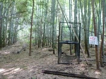 P1060300竹林とイノシシワナ.JPG