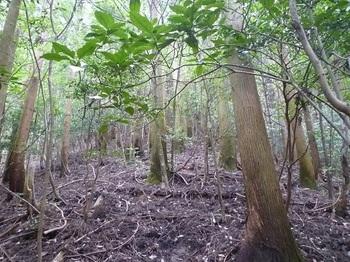 P1060317植林尾根の直登.JPG