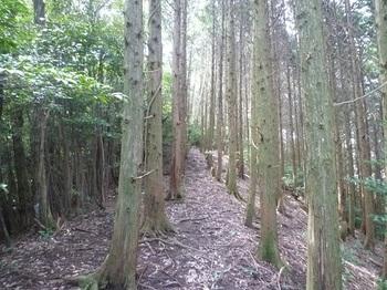 P1060318主尾根の植林境.JPG