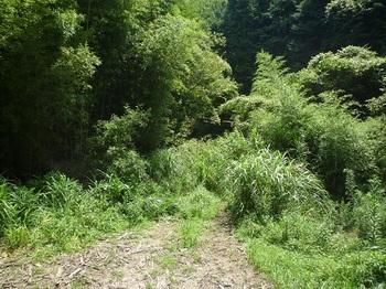 P1060330林道入口・草被り(逆方向).JPG