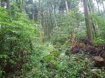 P1060444植林帯の山道(左カーブ地点).JPG