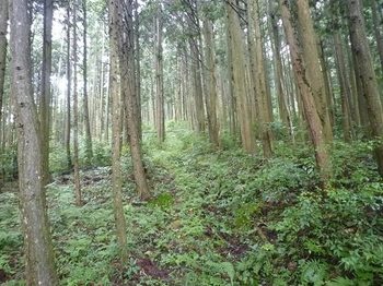 P1060445植林帯の尾根道.JPG