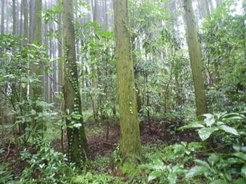 P1060460植林帯.JPG
