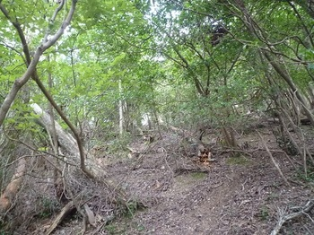 P1060509雑木疎林を直登.JPG