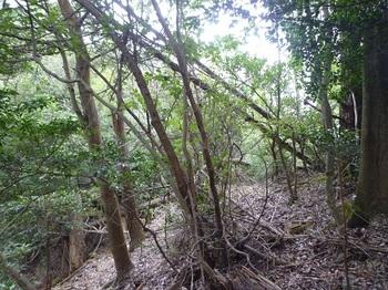 P1060513植林境のヤブ尾根.JPG