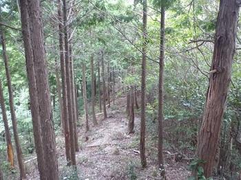 P1060519縦走路の植林境.JPG