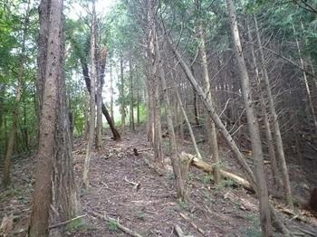 P1060532植林境の巡視路.JPG