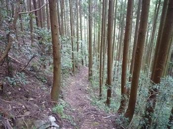 P1060541植林沿いの巡視路.JPG
