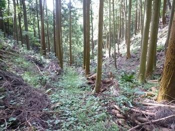 P1060642草付きの山道.JPG