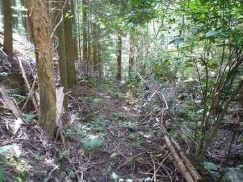 P1060646幅広のやや荒れた山道.JPG