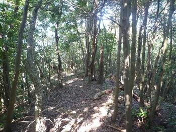 P1060690山頂先の雑木尾根.JPG