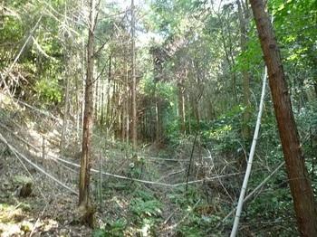 P1060695山道(逆方向).JPG