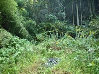 P1060696林道終点(逆方向).JPG